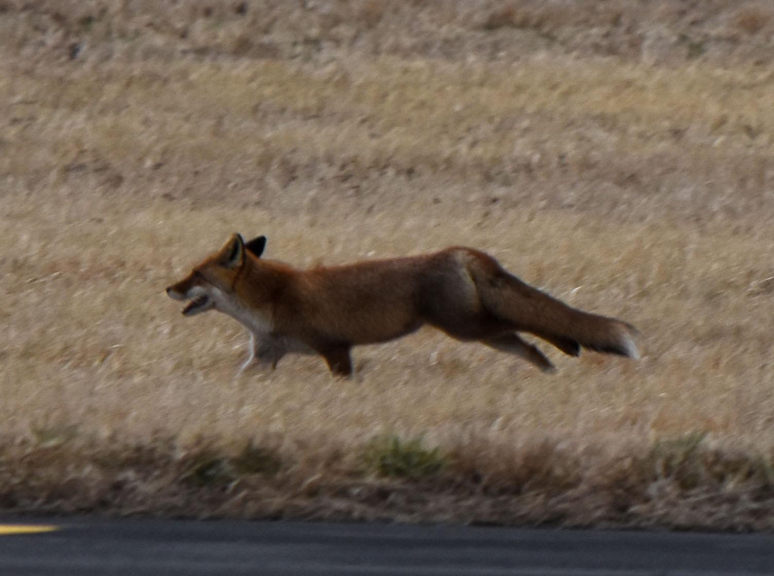Fox160309h371