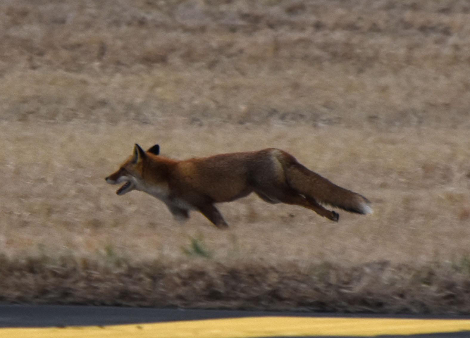 Fox160309h372
