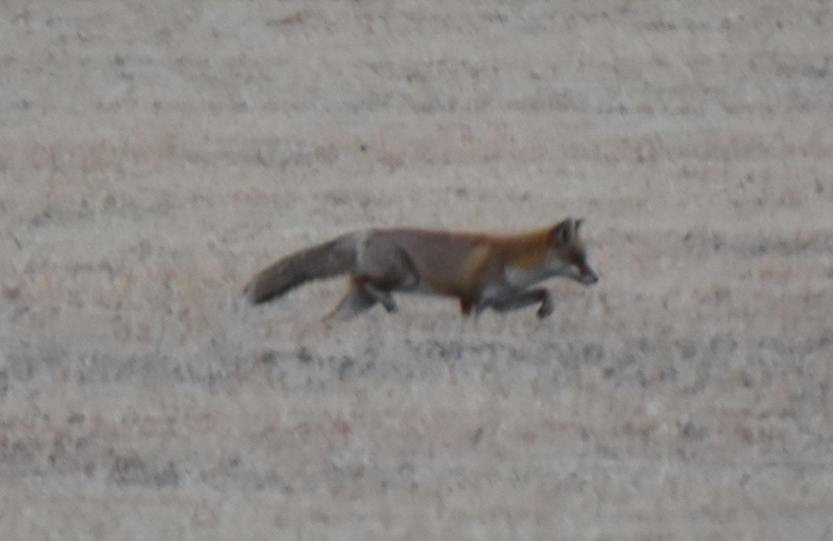 Fox170127g274
