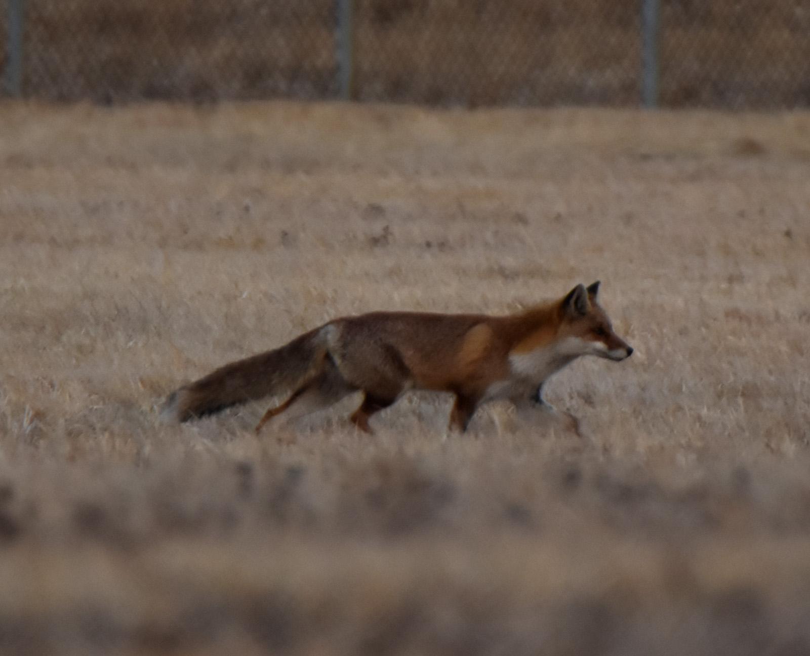 Fox170218g369